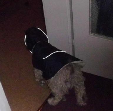 Wuschel mit neuem Mantel auf dem Weg nach Draußen